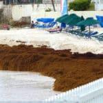 Apltraum Algen Strand ist nicht zu benutzen